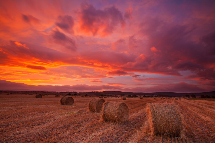 Bales of straw at dawn, Spey Valley, Cairngorms Nattional Park, Scotland, UK, October