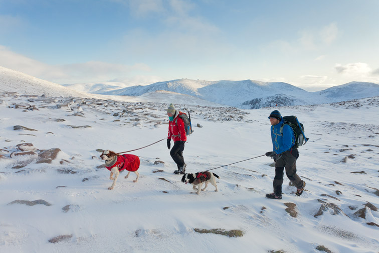Hill walkers and dogs in winter, Cairngorm, Cairngorms National Park, Scotland, December