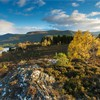 View over Rothiemurchus Forest to Cairngorm mountains, Cairngorms National Park, Scotland, UK