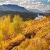 Glen Affric & Loch Affric in autumn (October) with Silver Birch (Betula pendula) and Bracken (Pteridium aquilinum) blowing around in strong wind.