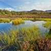 Small lochan surrounded by heather and Caledonian pine forest, Rothiemurchus, Cairngorms National Park, Scotland, UK