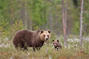 Brown Bear portfolio gallery